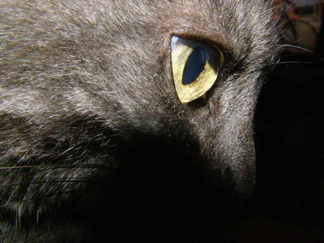 Oko, które widzi... Kamera.